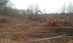 Clearing land began right away
